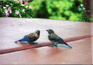 Activity_Pllovebirds